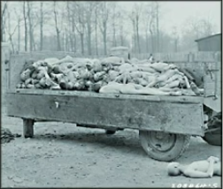 Image of Jewish bodies piled up from the holocaust
